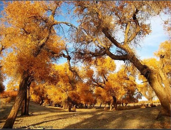 2012年10月新疆农二师跨越式课题指导活动简报